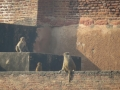 Животные Агра форта