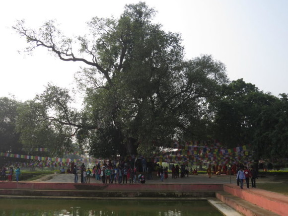 Дерево под которым родился Гаутама Будда