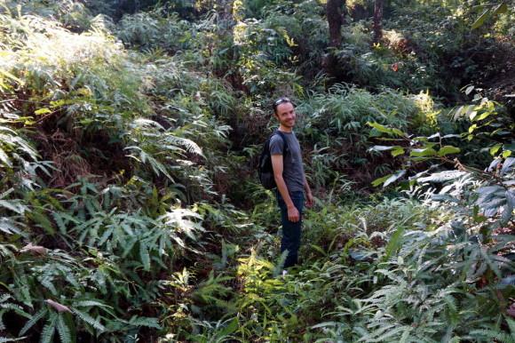Джунгли возле Покхары